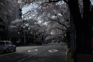 Sakura20101