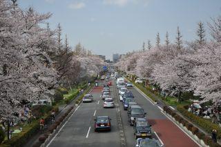 Sakura20102