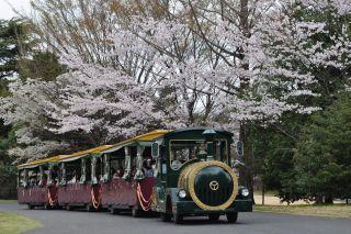 Sakura20111